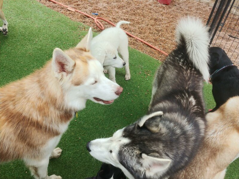 doggie daycare in denver co
