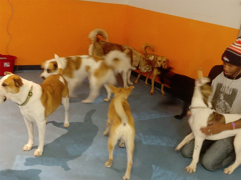 Dog Boarding Services in Denver, CO | Overnight Dog Boarding