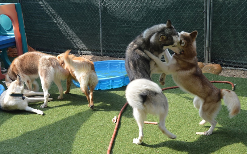 dogs in air