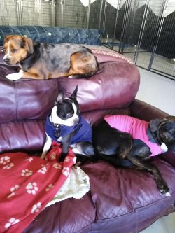 big-dogs-daycare-denver-location