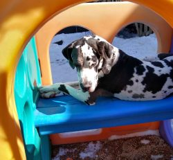 dalmatian playhouse