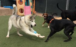 dogs playing with ball