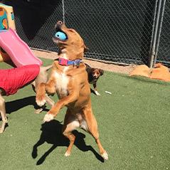 dog-daycare