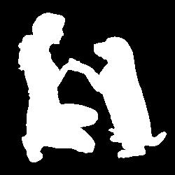 dog-daycare-denver