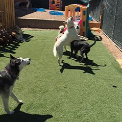 Pet & Doggie Daycare Center in Denver, CO | Dog Socializing