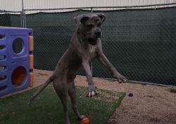 dog on 2 legs
