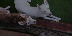 dog-boarding-denver